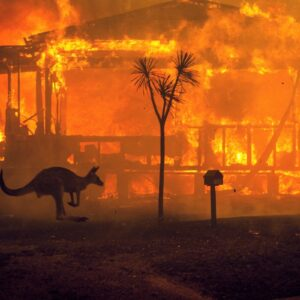 A kangaroo rushes past a burning house in Lake Conjola, Australia, on Tuesday, Dec. 31 2019. This fire season has been one of the worst in Australia's history, with at least 15 people killed, hundreds of homes destroyed and millions of acres burned.  (Matthew Abbott/The New York Times)